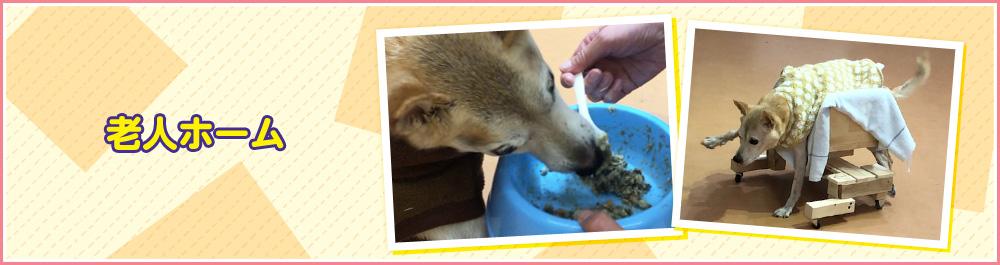 dog-home-main